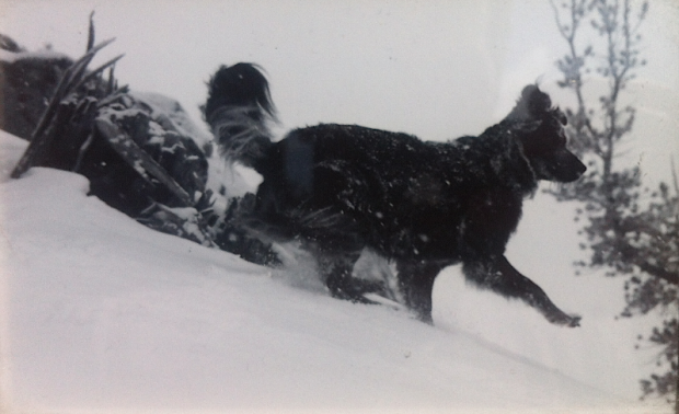 My dog, Hidatsa, on top of Jake'sPeak