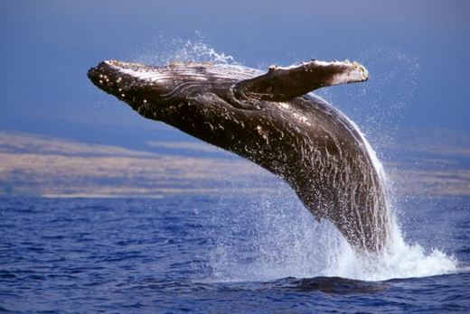 breathe humpback
