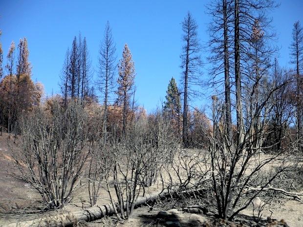 Fire damage near Rim of the World vista point.