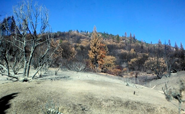 Highway 120 near Yosemite Park entrance.  Beige stuff in foreground is some sort of fire suppressant that was sprayed there by firefighters.