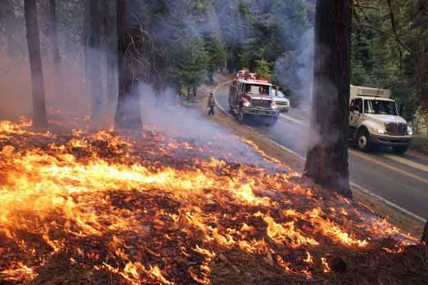 Rim fire in Sept. on side of highway 120.   photo: wildfiretoday.com
