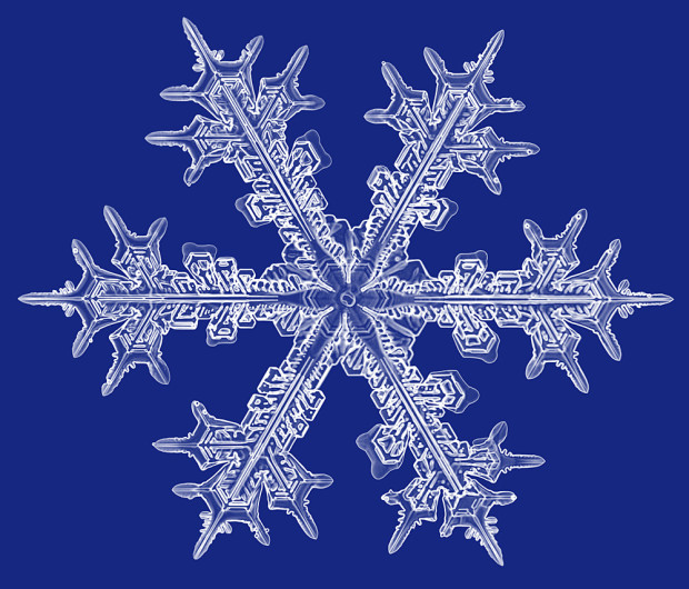 An incredible microscope photo of a Stellar snow crystal with well grown dendrites.
