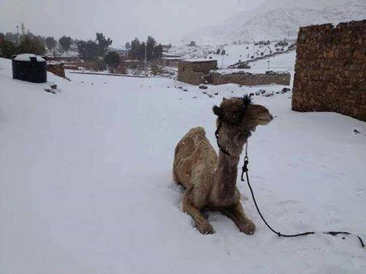 egypt with snow