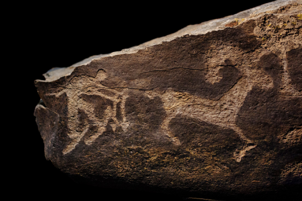 Scientists say the Altai hunter's lifestyle extends back thousands of years, as evidenced by this ancient rock engraving of a skier chasing an ibex. photo: npr
