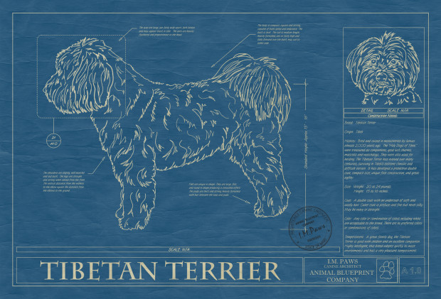 TIBETAN TERRIER zoom version