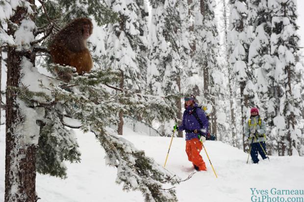 monkeys skiing