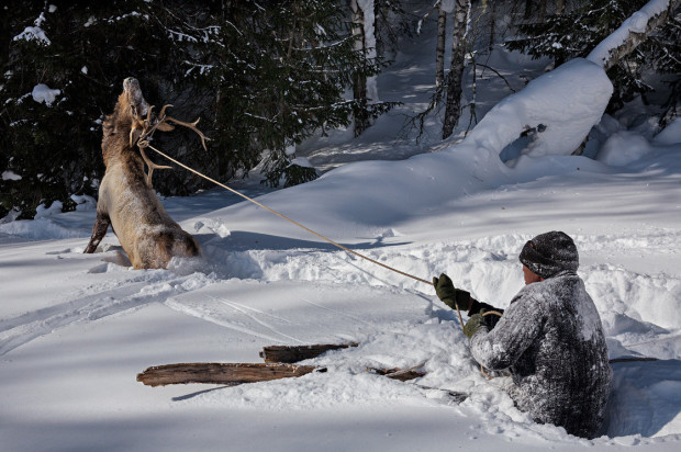 hunting elk on skis