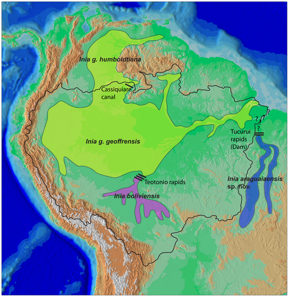 Map showing locations of different South American river dolphin species.  The new species, Araguaia is in blue.