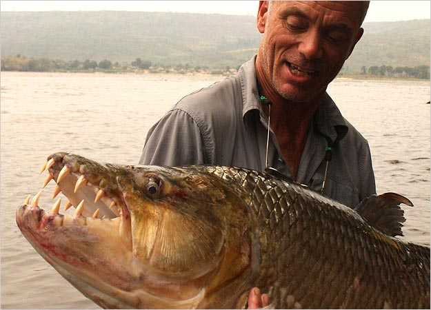 Tuesday fun african tigerfish catches bird mid flight for Tiger fish pictures