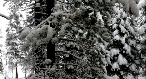 SNOW in Tahoe: Photo Tour and Snowfall Totals (It's Still Snowing)