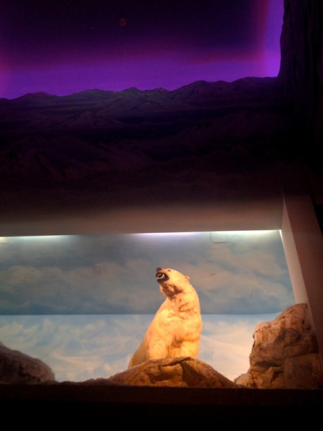 Alyeska Hotel has bears.