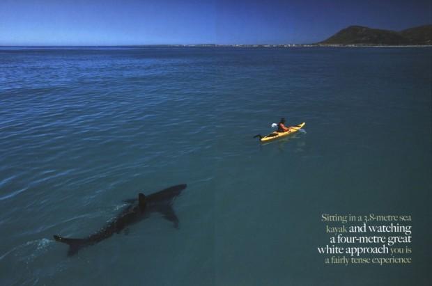 great-white-shark-approaching-1024x680