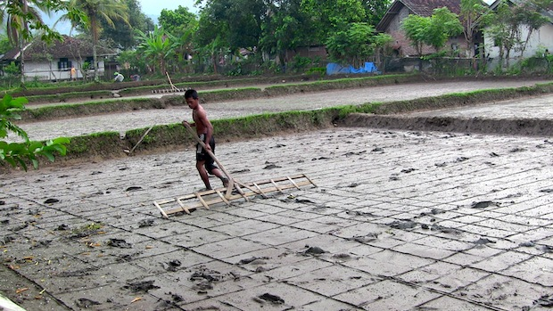 Marking where the rice is to be planted