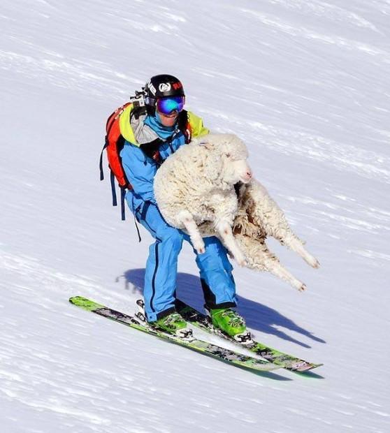 Lamb sacrafice to Skadi, the goddess of snow.