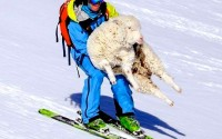 ski sacrafice