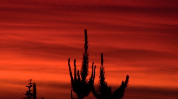 Sunset on Punta de Lobos is worth a look.