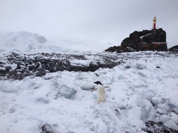 Adelie Penguin and lighthouse on King George Isle, Antarctica.