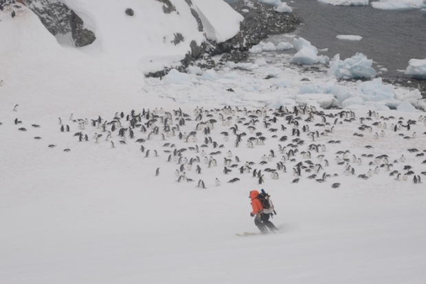 Slow for penguins! Not a normal thing to say in skiing, unless you're in Antarctica. photo: Juha Virolainen