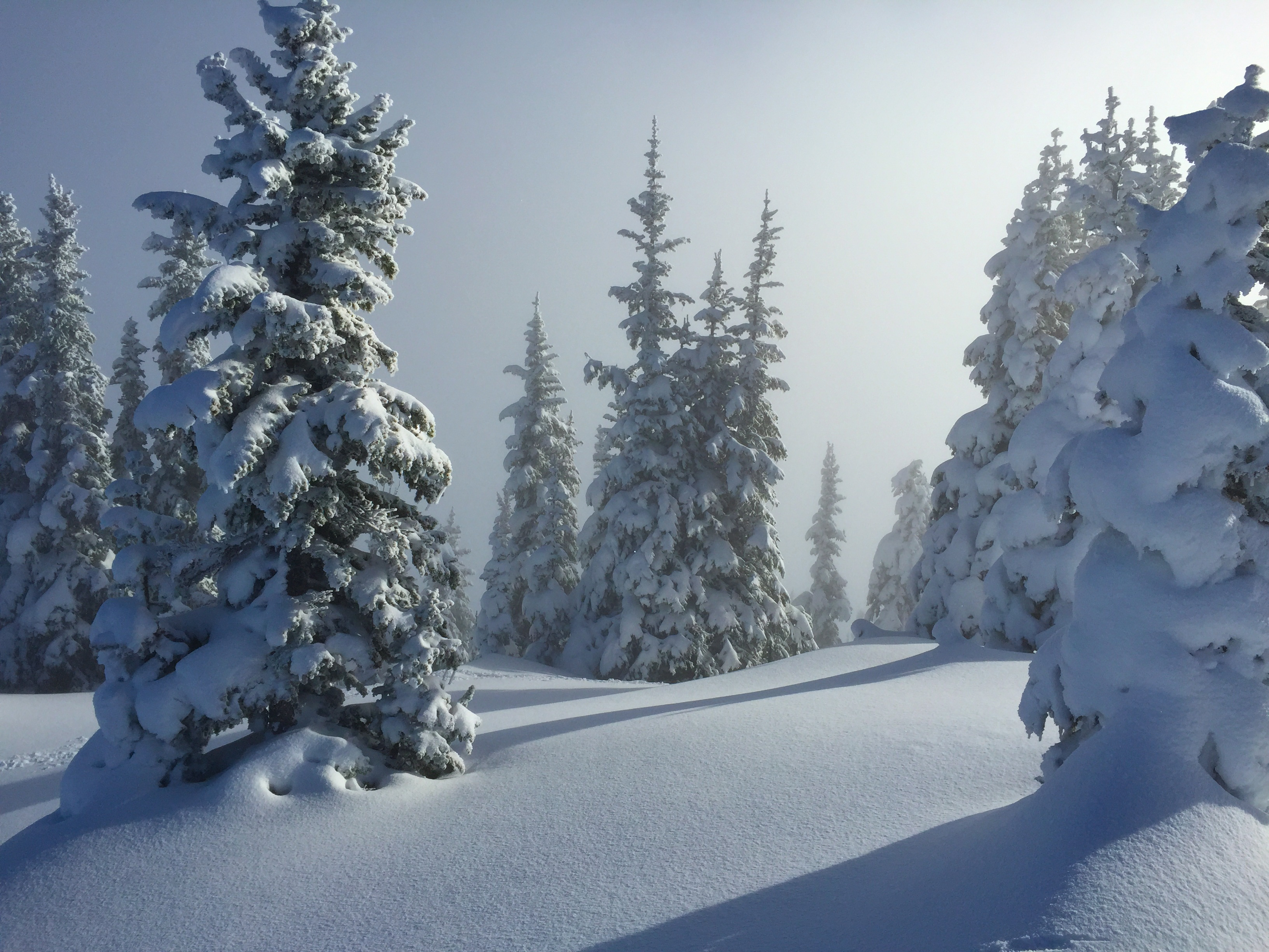 Unskied trees in the afternoon light at Crystal.