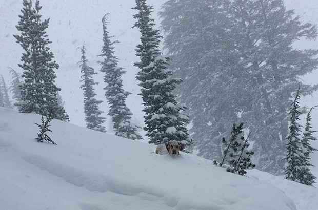 It was chest deep! At least for Cody...