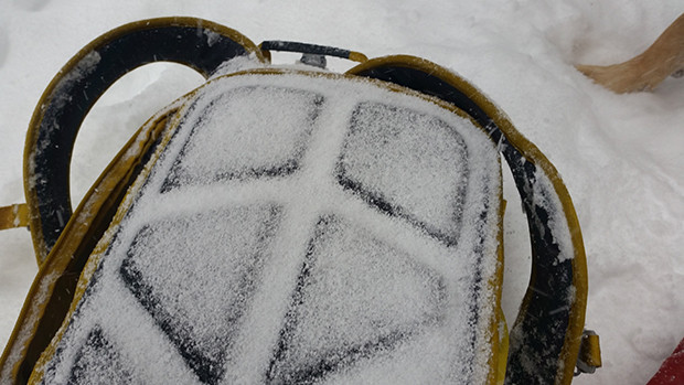 Snow coated pack over the course of transitioning