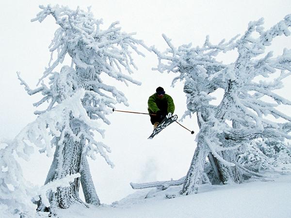 Skier Jumping Between Trees