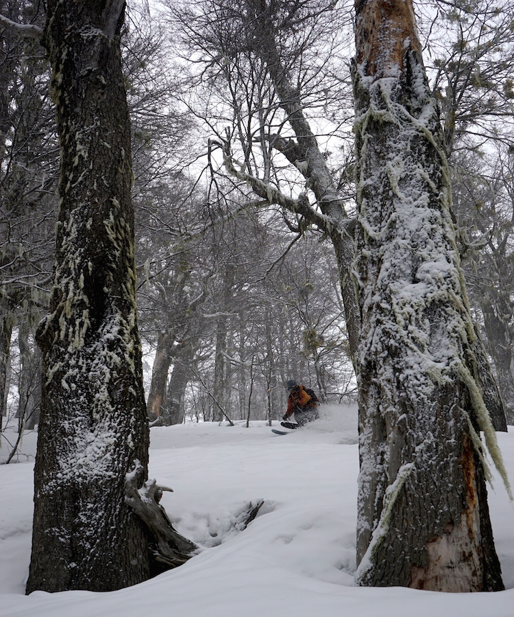 Even getting some good turns in the trees this week.