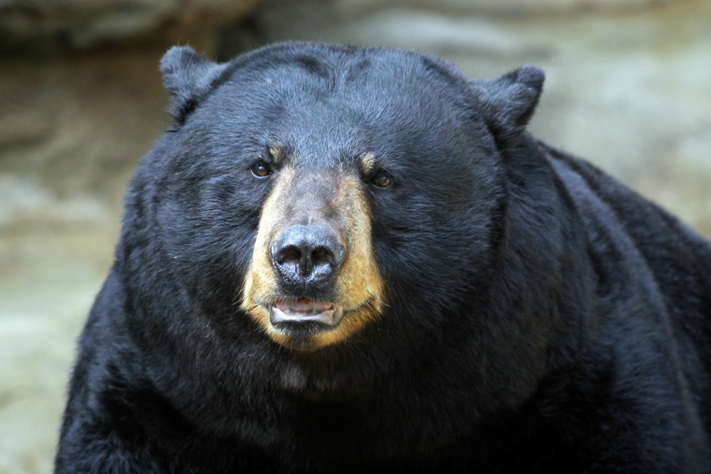 Bear Attacks & Seriously Injures Man in Northern ... - photo#31