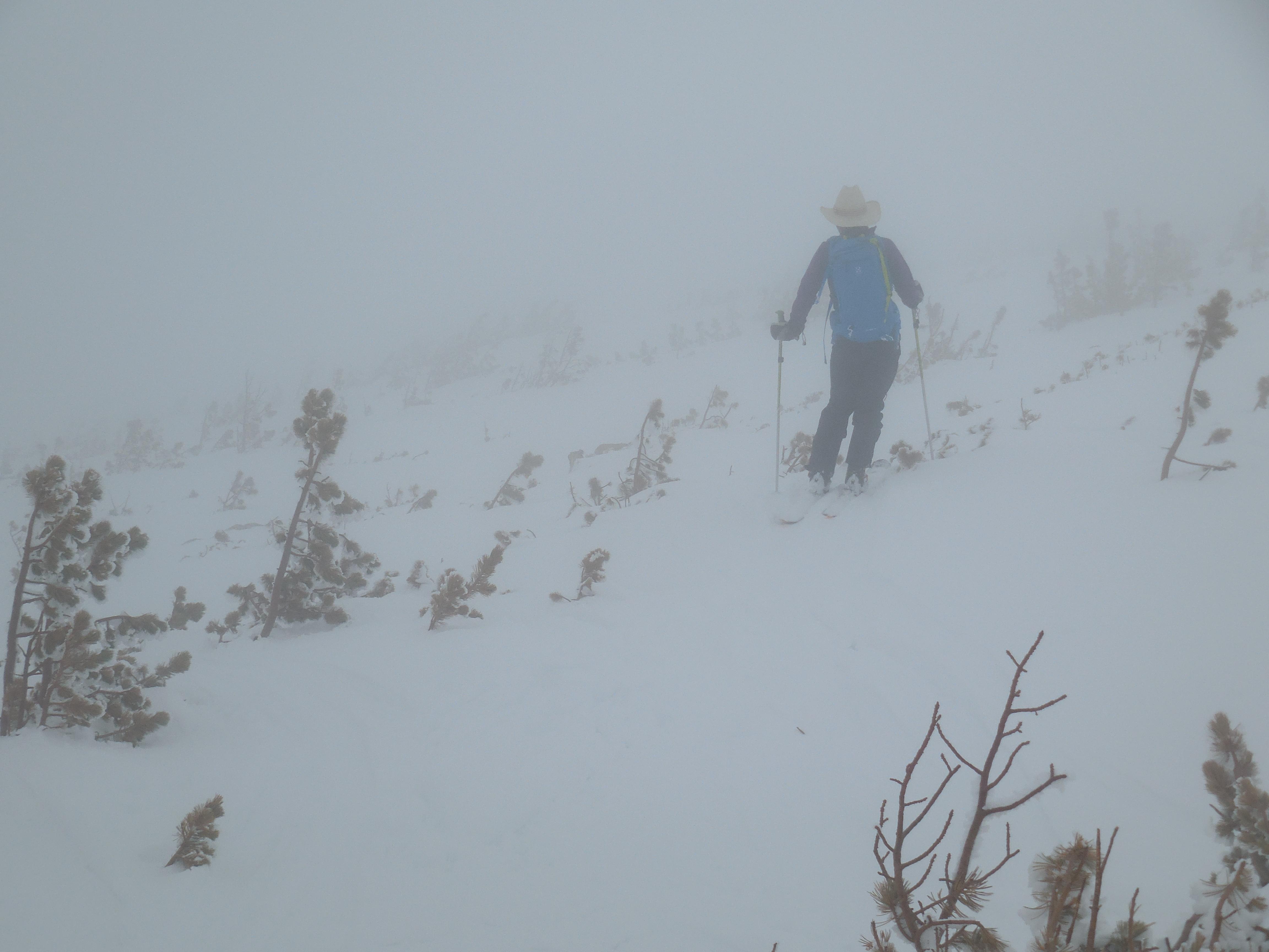 Mini pine may ski even better than manzanita.