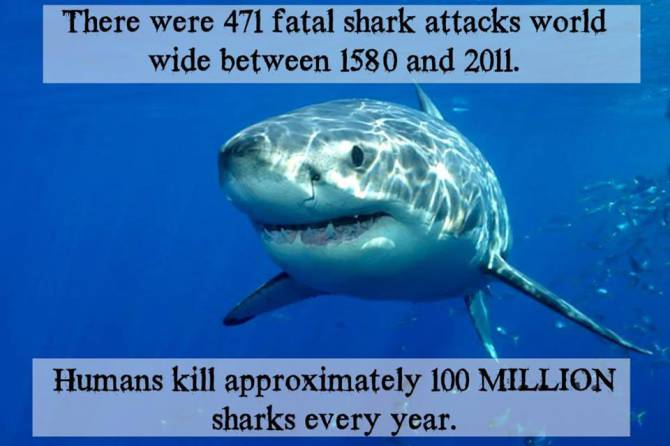 How Many Sharks Are Killed In Australia For Food