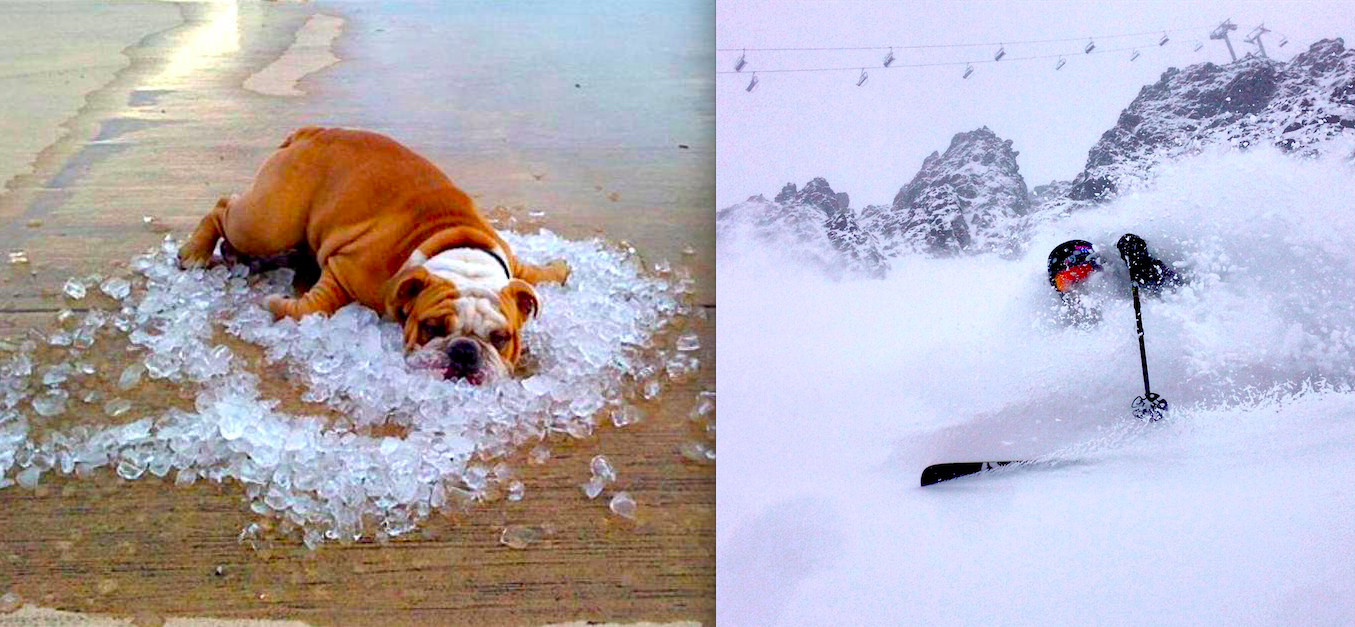 You pick? Dog days of summer or Powder Days of summer... ski image: adam cole, skier: travis ganong