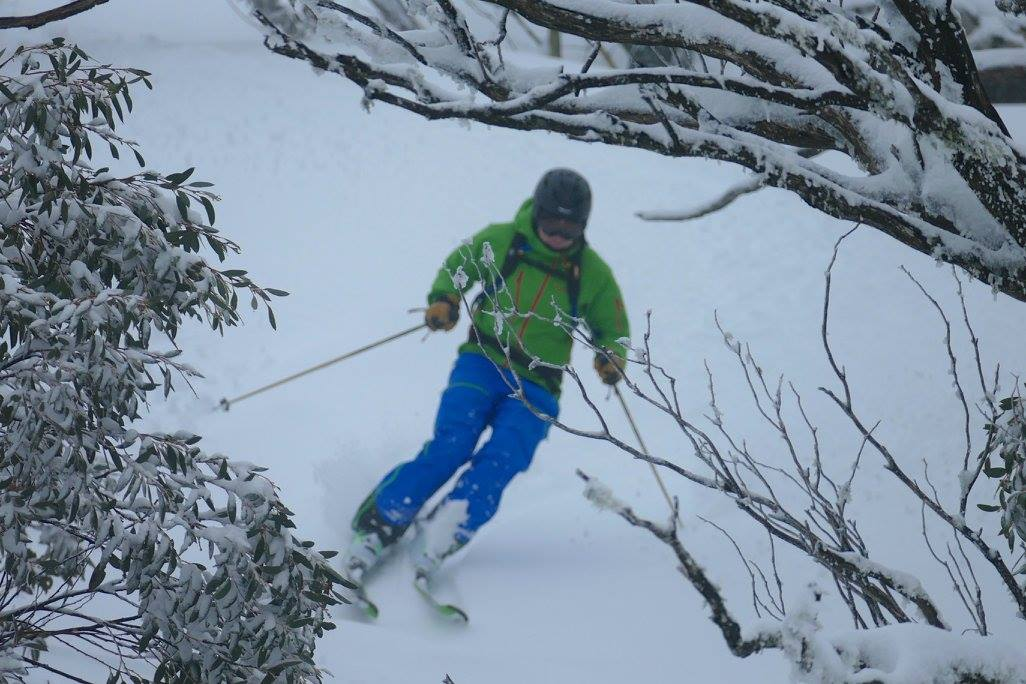 Gum trees. August 2016. photo: skiing with steve lee