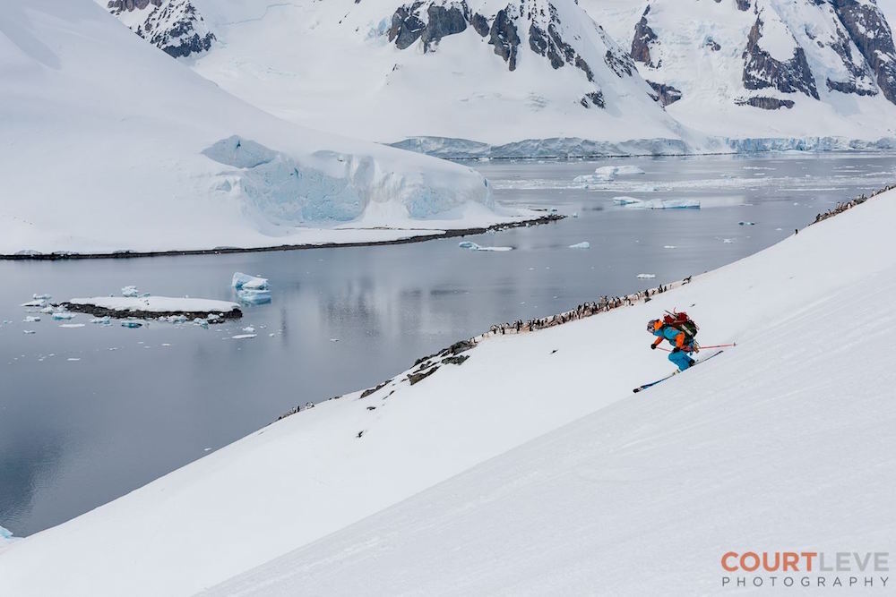 Mountain Guide Miles Clark skiing with penguins. image: Court Leve/Ice Axe Expeditions