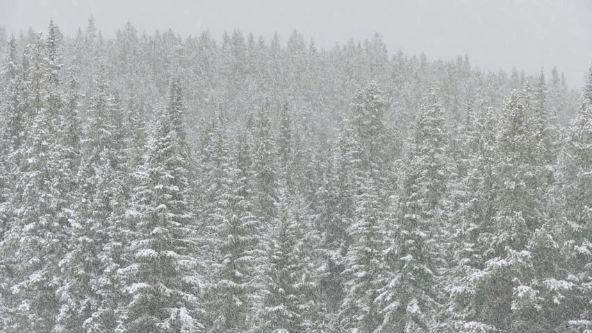 Heavy snowfall in the forests of the Canadian Rocky Mountains, Alberta, Canada . PC: Shutterstock