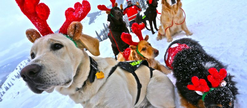 crested-butte-xmas-dogs-min