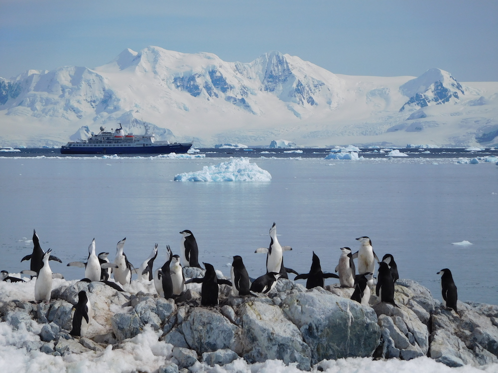 Singing Chinstrap penguins and the Sea Adventurer. image: miles clark
