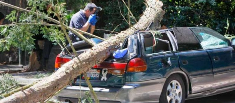Stock picture of a tree falling on a Subaru. Image: SF Chronicle