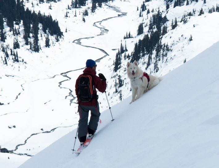 split boarding, uphill, ski-touring, ski-mo, dog