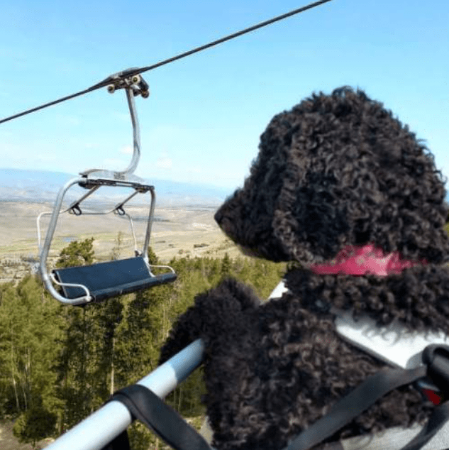 veteran, dog, winter park, colorado, chairlift,