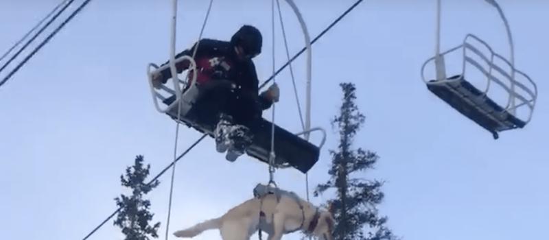 bo, patrol dog, lift evacuation, video