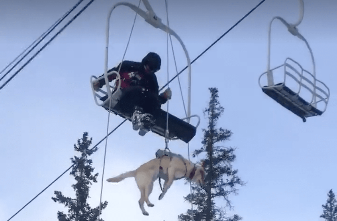 bo, patrol dog, lift evacuation, video, evacuation