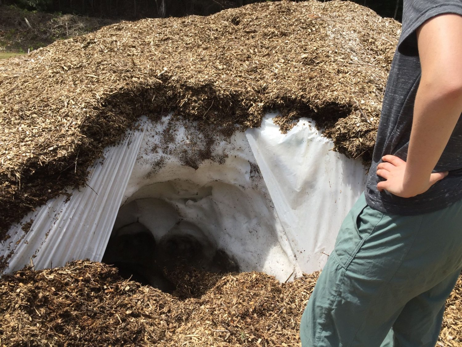 Testing the wood-chip method, snow farming
