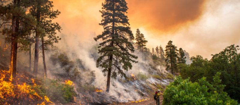 wildfire, blaze, colorado