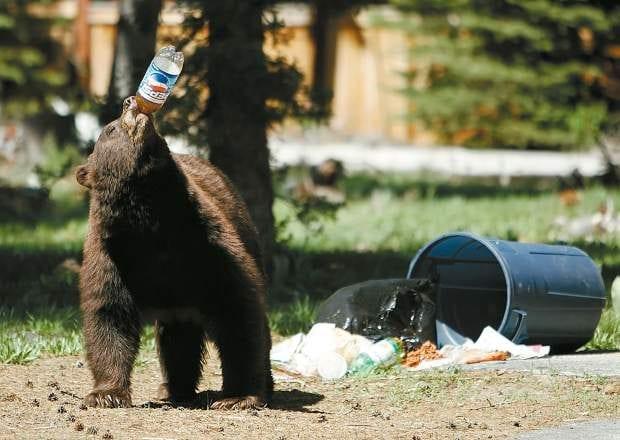 bear, trash