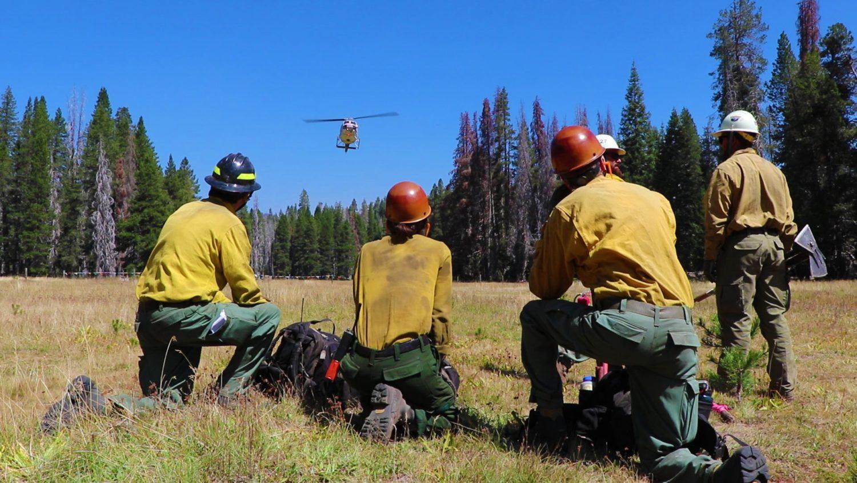 california, wildfire, beetle kill, drought