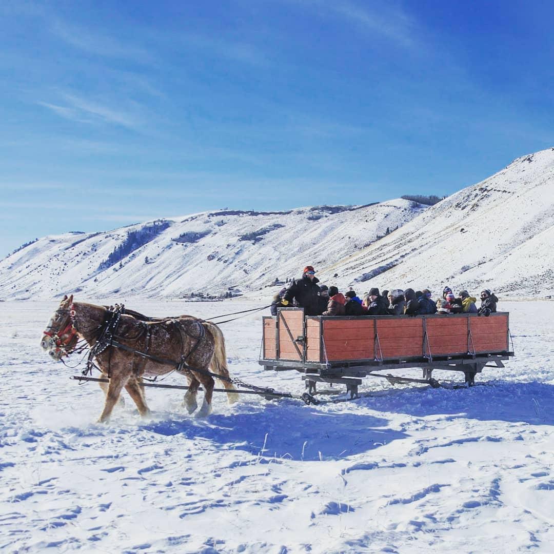 Sleigh ride, Jackson, NER, National Elk, Horse tour jackson hole, jackson wyoming horse