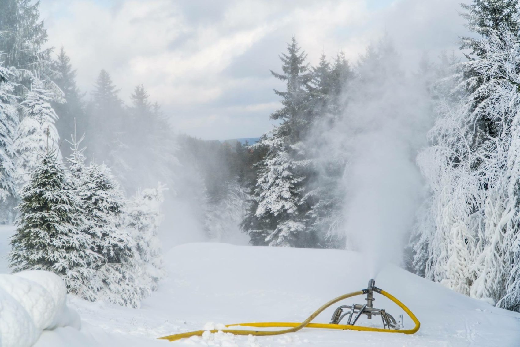 Snowshoe Snow