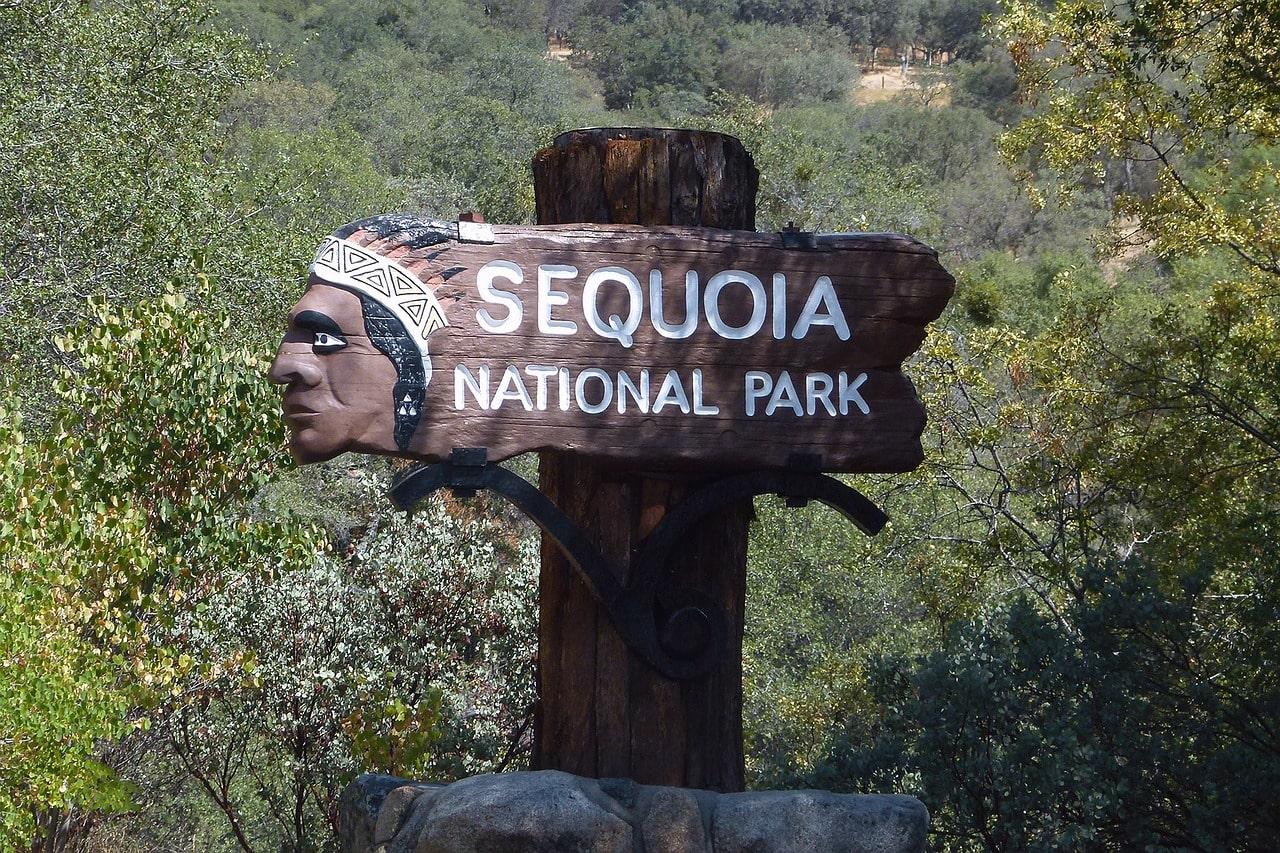 sequoia, cell tower, Verizon, selfie