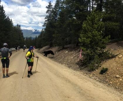 bear, Leadville, colorado, marathon, runners