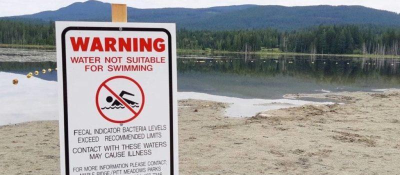 beaches, fecal matter